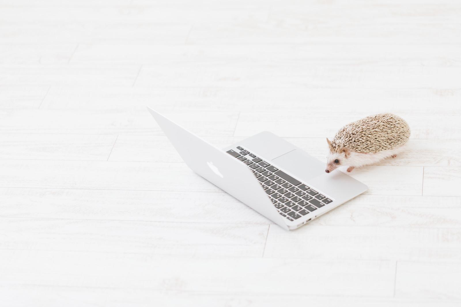 パソコンとハリネズミ